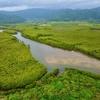 仲間川のマングローブ林(exp.5,664分)