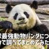 地球最強動物パンダについて全力で調べてまとめてみた