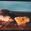 のんほいパーク 5月にうまれたゴマフアザラシの赤ちゃん観に行ってきた【東海ドライブ】