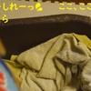 ベッドを食べちゃうよ!だよ。