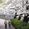 石神井川の桜は撮影しやすいです。