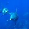 御蔵島で見られる野生イルカの種類と魅力について
