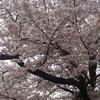 2013年J2第6節「京都×徳島」