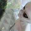 【独女の休日】新サンシャイン60展望台は都内でVR初体験に興奮した②