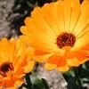 久々のお花写真。。。 (´∀`)