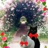 梅雨の合間の薔薇園散歩
