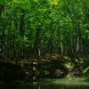 ペンタグリーンで撮る新潟は美人林