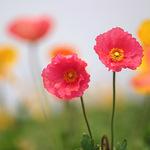 「置かれた場所で」ではなく「咲きたい場所で」咲くために。置かれた場所でできること