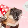 犬のボディランゲージクイズ|どれだけ愛犬の気持ちを理解できてる?