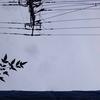 2018年1月31日(木)
