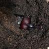【カブトムシの飼育】我が家の飼育箱は大賑わい!こんなに暴れるものですか