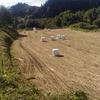 飼料米への転作
