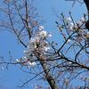 パーヴォ・ヤルヴィの交響曲第1番『春』