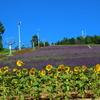 【北海道】登山の小休止で富良野観光、ラベンダーの花畑と静かなボート、北海道グルメを満喫する旅