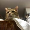 人間のストレッチは猫の目にはどう映っているのか?