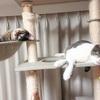 ケンカするのか、しないのか、はっきりしない猫たちと、ズボラ飼い主【暑すぎる】