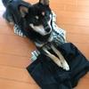 犬は服が大好き?