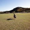 GW明け週の犬山歩!