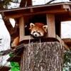 18きっぷの旅三日目仙台市八木山動物公園といきなりステーキと