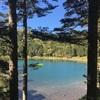 北八ヶ岳の森を歩く