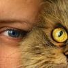 ★猫は生まれ変わったら猫になる?犬になる?★ペットは動物のラストステージ★
