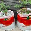 【家庭菜園2019】トマト栽培はじめました(トマト大王+フルーツルビーEX)with トマトの土