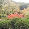 万博記念公園の紅葉を観に20181125撮影。