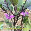 けふの花。20200601
