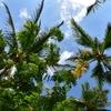 ハワイ、オアフ島で小学生ぐらいの子連れファミリーにオススメのアクティビティです。実際参加したものから順位付けてみました。(Hawaii, O'ahu, activity)