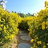 タイ湖の広々な花畑〜ハノイの街中でピクニック気分