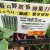 畑に苗を植える
