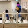 5歳の娘、キッザニア東京で7回目のお仕事体験。はんこ屋、DJ、動物病院 & チャレンジコース2つ星達成☆☆