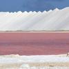 ベネズエラ沖に浮かぶ【ボネール島】ピンク色の絶景に出会える島内観光ツアー