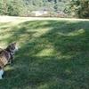 お散歩猫さん