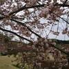 つがの里(栃木市)の八重桜!
