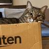 【生後4か月】猫のオシッコが赤い!その原因は飼い主にあり!?