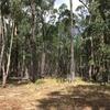 オーストラリアの森での暮らしが、インドア派にはなかなかワイルドだった件その1