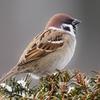 それでも走るか?!95 鳥の鳴き声に癒やされる 早朝ランニング