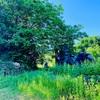 たまには大自然の風景でもいかがですか