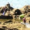 海水浴だけじゃない!海で子供と遊ぶなら、磯遊びをしてみよう