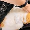 るるちゃん写真集vol. 17「仕事椅子に相乗りする甘えん坊猫さん」