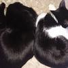今日の黒猫モモ&白黒猫ナナの動画ー945