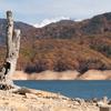 湖底の樹木:色づく有峰2020(3)