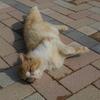猫と金魚とひよこ豆