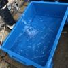 稚魚水槽の掃除