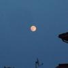 綺麗な月が見れました