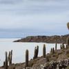 ウユニ塩湖 日帰りツアーの訪問先 3.インカワシ島