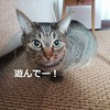 猫と一緒に遊ぶときにかけたい音楽【テンションMAX】