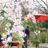 春の江戸東京たてもの園/抹茶と武蔵野うどんとマグネット