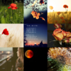 アメブロ、Instagram、Facebookに作家「月下美人」さんの詩×「小石川 尚」さんのフォトのコラボレート作品をご紹介しました。